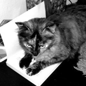 study_cat1-blackwhite